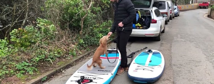 how-to-paddle-board-with-a-dog
